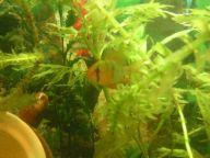 Помогите опознать рыбку опознание рыб  - Фото-0098.jpg