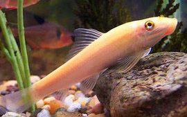 Помогите опознать рыбку опознание рыб  - s320x240.jpg