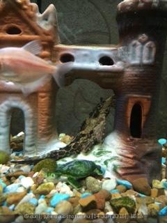 Помогите опознать рыбку опознание рыб  - IMG_0494.JPG