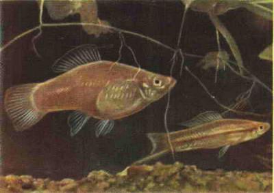 Какому количесвту рыбок будет комфортно в 50 литрах? - 75.jpg