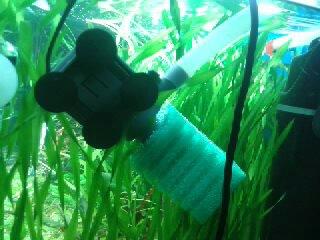 Выбор внешнего фильтра для аквариума. Какой выбрать внешний фильтр? - 1471812645260.jpg