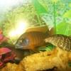 Помогите опознать рыбку опознание рыб  - 9e493eb5ffaaf92064f4f9d946b1455f_thumb.jpg