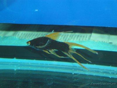 Определение и диагностика болезней у аквариумных рыб - DSC03029.JPG