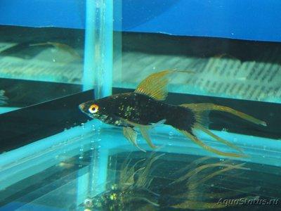 Определение и диагностика болезней у аквариумных рыб - DSC03031.JPG