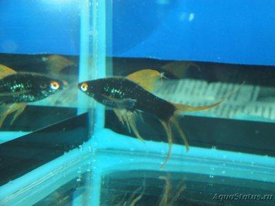 Определение и диагностика болезней у аквариумных рыб - DSC03039.JPG