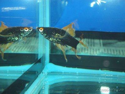 Определение и диагностика болезней у аквариумных рыб - DSC03044.JPG