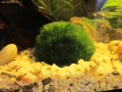 Опознание аквариумных растений - IMG_0507.JPG