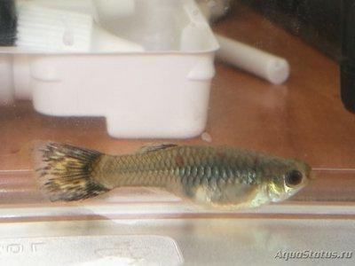Определение и диагностика болезней у аквариумных рыб - IMG_20180507_155106.jpg