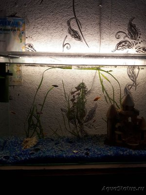 Общий аквариум - 15265285610251669800617.jpg