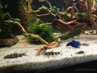 Помогите опознать рыбку опознание рыб  - IMG_4477.JPG
