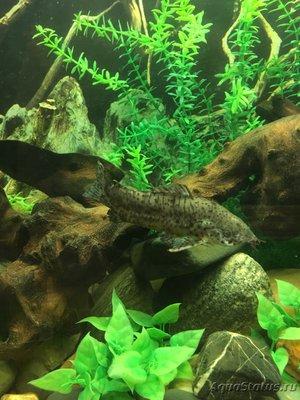 Помогите опознать рыбку опознание рыб  - F9179ECB-EE4A-4642-8483-56A120F44F7A.jpeg