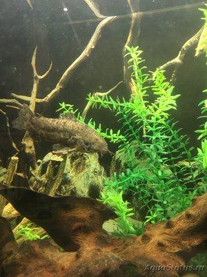 Помогите опознать рыбку опознание рыб  - FEA04F73-F43D-42FD-8923-9CB23CCC4C65.jpeg