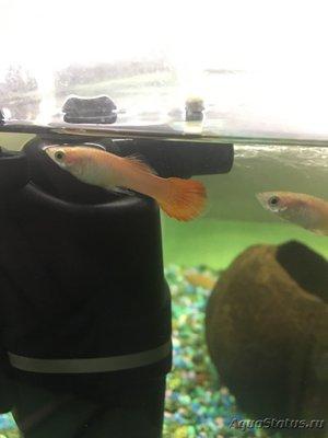 Почему умерла рыбка или гибнут рыбки в аквариуме? - image.jpg
