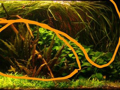 Аквариумные растения - опознание растений. - 2018-07-04 18.22.08.jpg