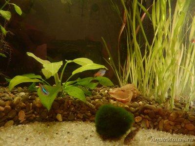 Мой аквариум на 35 литров Vvlysov  - P7104634.JPG