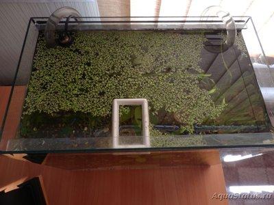 Мой аквариум на 35 литров Vvlysov  - P7104640.JPG