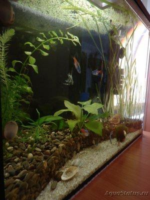Мой аквариум на 35 литров Vvlysov  - P7104644.JPG