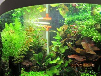 Переделка фильтра Juwel Bioflow - IMG_0433.JPG