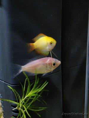 Помогите опознать рыбку опознание рыб  - IMG_20180721_231303_919.jpg