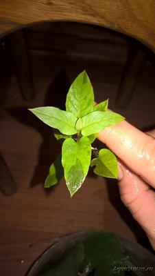 Аквариумные растения - опознание растений. - WP_20180820_13_13_21_Pro.jpg