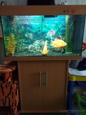 Продам аквариум Jewel Rio 125 Красногорск  - IMG_20180615_132757.jpg