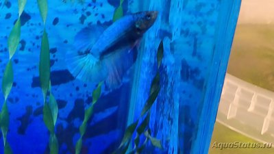 Помогите опознать рыбку опознание рыб  - IMG_20180904_193038.jpg