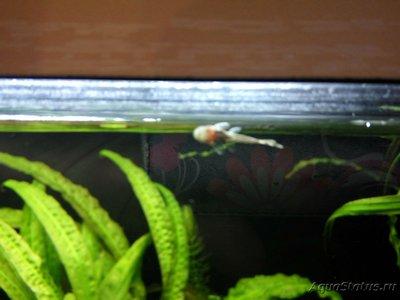 Мой аквариум 110 литров yulia211  - IMG_20180913_082956_HDR.jpg