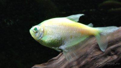Определение и диагностика болезней у аквариумных рыб - DSCN4074.JPG