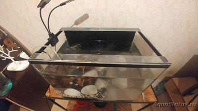 Неровно стоит аквариум - afnWh8qOwAs.jpg