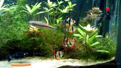 Помогите опознать рыбку опознание рыб  - IMG_20181102_153428.jpg