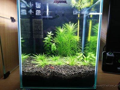AquaEl Shrimp Set Smart - дом для Рэдфайеров 20 литров Doctor_Zig  - IMG_20181104_210609.jpg