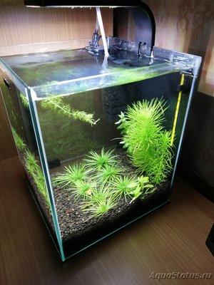 AquaEl Shrimp Set Smart - дом для Рэдфайеров 20 литров Doctor_Zig  - IMG_20181104_210852.jpg