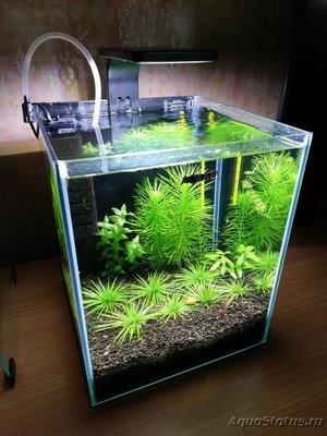 AquaEl Shrimp Set Smart - дом для Рэдфайеров 20 литров Doctor_Zig  - IMG_20181104_210901.jpg