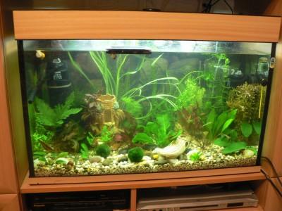 Неровно стоит аквариум - P108009822.JPG