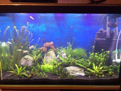 Параметры воды в аквариуме - ws0m80EVhYA.jpg