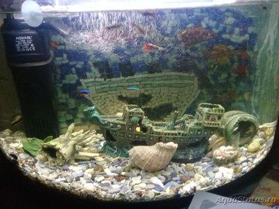 Перезапуск аквариума - 20181108_165230.jpg