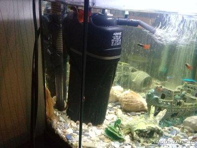 Перезапуск аквариума - 20181108_165243.jpg