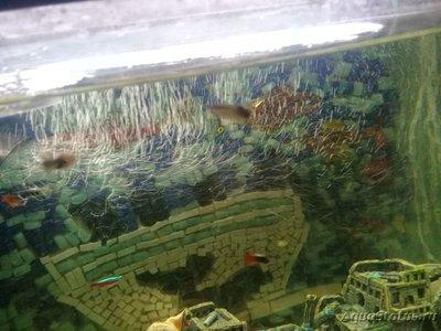 Перезапуск аквариума - 20181108_165304.jpg