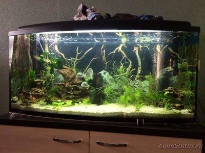 Выбор рыбок для аквариума - image.jpeg