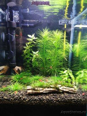 AquaEl Shrimp Set Smart - дом для Рэдфайеров 20 литров Doctor_Zig  - IMG_20181123_213302.jpg