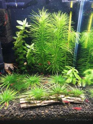 AquaEl Shrimp Set Smart - дом для Рэдфайеров 20 литров Doctor_Zig  - IMG_20181123_213240.jpg