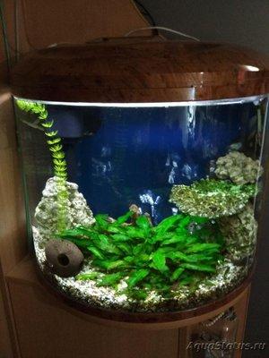 Подбор населения для аквариума - photo_2018-12-05_18-35-59.jpg