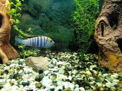 Помогите опознать рыбку опознание рыб  - IMG_20181206_212208.jpg