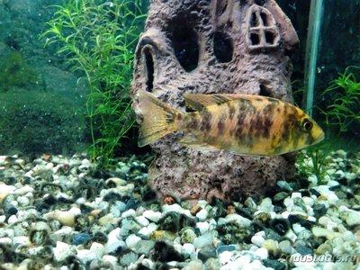Помогите опознать рыбку опознание рыб  - IMG_20181206_211637.jpg