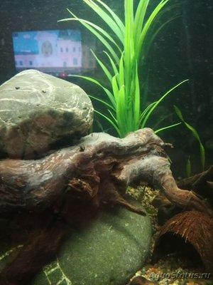 Коряга в аквариуме - IMG_20181223_184425.jpg