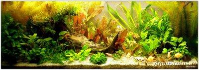 Что такое баланс в аквариуме? - P1010005.JPG