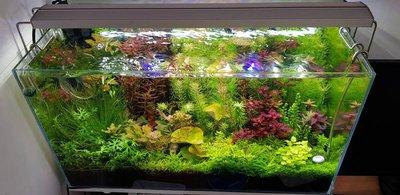 Светодиодное освещение аквариума - user50741_pic259363_1533031443.jpg