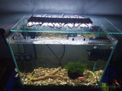 Мой самый первый аквариум 20 литров Dormidon  - IMG_20190107_021428.jpg