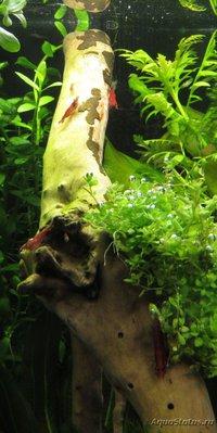 Коряга в аквариуме - IMG_1072 — копия.JPG
