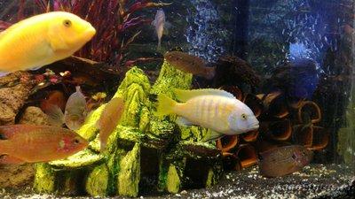 Помогите опознать рыбку опознание рыб  - WhatsApp Image 2019-01-02 at 22.05.42.jpeg